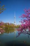 Jeziora TV wierza przy wiosną w Tashkent, Uzbekistan Fotografia Royalty Free