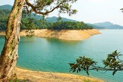 Jeziora wodny i antyczny drzewo fotografia stock