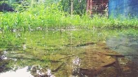 Jeziora wody i sumy drzewo Zdjęcia Royalty Free