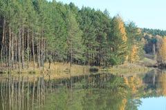 jeziorna ananasarnia Zdjęcia Stock
