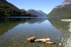 jeziorna bela Obrazy Royalty Free