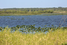 Jeziorna Kissimmee bagna roślinność i otwarta woda w środkowy Florid Fotografia Royalty Free