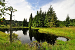 jeziorna natura Zdjęcia Royalty Free