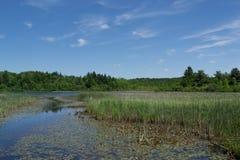 Jeziorna panorama Zdjęcie Stock