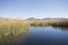 Jeziorna Scena Obraz Stock