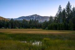 Jeziorna Tahoe łąka fotografia royalty free