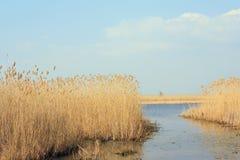 jeziorna wiosna Zdjęcia Stock