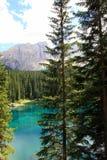 jeziorne sosny montain leśne Obrazy Stock
