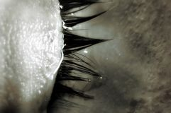 jeziorne łzy Obrazy Stock