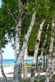 jeziorni brzegu drzewa Fotografia Royalty Free