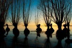 jeziorni drzewa fotografia royalty free