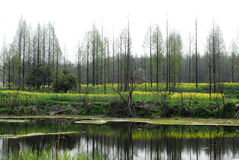 jeziorni drzewa zdjęcia stock