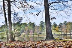 Jeziorni widoków drzewa fotografia royalty free