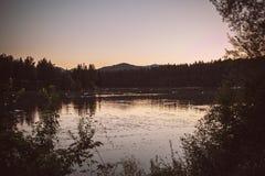 jeziorny łabędź Zdjęcia Stock