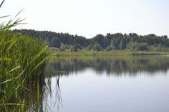 jeziorny łabędź Zdjęcia Royalty Free