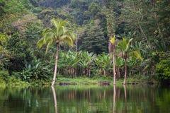 Jeziorny Balinsasayao w Dumaguete na Negros wyspie, Filipiny Zdjęcia Royalty Free