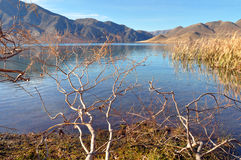 Jeziorny Benmore & Raupo, wierzby, Otago, Nowa Zelandia Fotografia Stock