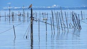 Jeziorny Biwa w Japonia Zdjęcia Royalty Free