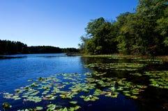 Jeziorny Boczny widok z Jasnym niebieskim niebem zdjęcie stock