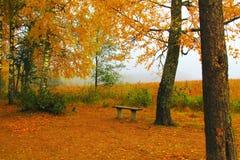 Jeziorny brzeg na Mgłowym jesień dniu Zdjęcia Stock