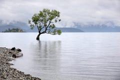 jeziorny drzewny wanaka Obraz Stock