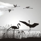 jeziorny flaminga brzeg Obraz Royalty Free