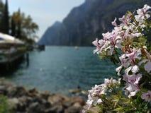 Jeziorny Garda obrazy royalty free