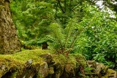 Jeziorny Gromadzki park narodowy, Lasowe paprocie obraz royalty free