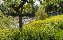 Jeziorny Hondegat Asperen obraz royalty free