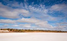 Jeziorny jeleń w wiejskim Australia zdjęcia stock