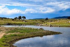 Jeziorny Jindabyne foreshore w Australia zdjęcie stock
