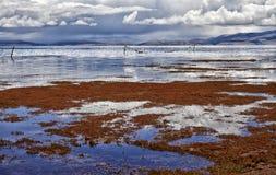 Jeziorny Manasarovar zdjęcie royalty free