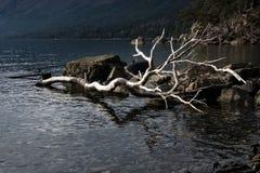 Jeziorny Mascardi Zdjęcia Royalty Free