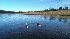 Jeziorny Moogerah w Queensland zdjęcie wideo