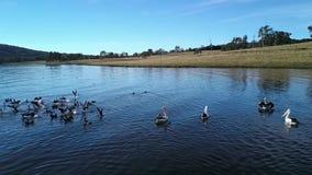 Jeziorny Moogerah w Queensland podczas dnia zbiory wideo
