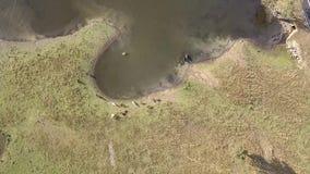 Jeziorny Moogerah w Queensland podczas dnia zbiory