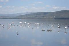 jeziorny nakuru Obraz Royalty Free