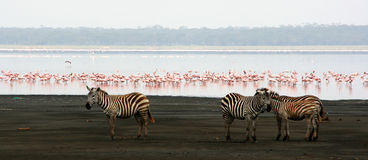Jeziorny Nakuru Obraz Stock