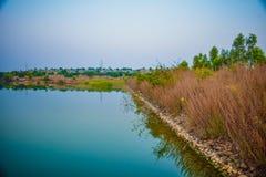Jeziorny nieba tree& x27; s tło Zdjęcia Stock