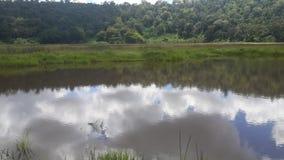 Jeziorny nkunga w Kenya obrazy royalty free