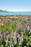 jeziorny nowy tekapo Zealand Obrazy Royalty Free