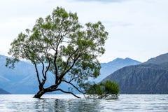 jeziorny nowy wanaka Zealand Zdjęcia Royalty Free