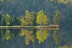 Jeziorny odbicie drzewa w wczesnej wiośnie Obrazy Royalty Free
