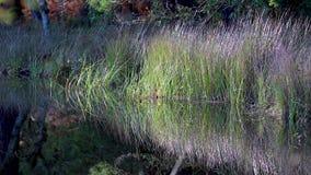Jeziorny odbicie w sosnowym lesie podczas jesieni, Scotland zbiory