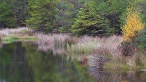 Jeziorny odbicie w sosnowym lesie podczas jesieni, Scotland zbiory wideo