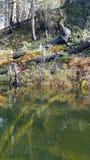 Jeziorny odrośnięcie Zdjęcie Stock