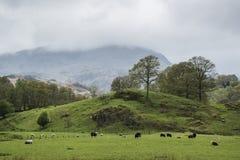 Jeziorny okręgu krajobraz z burzowym niebem nad wsi anf fie Fotografia Royalty Free