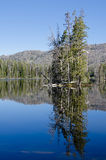 jeziorny park narodowy jeziorny Yellowstone Obrazy Stock