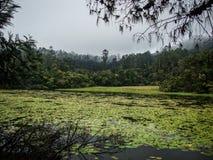 Jeziorny pełny rośliny Obraz Royalty Free