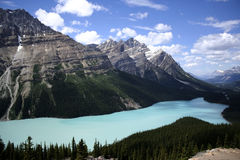 jeziorny peyto Obraz Royalty Free